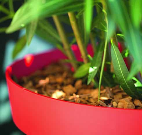 L'entretien d'un ficus, une plante d'intérieur populaire