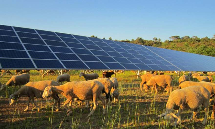 La production d'énergies renouvelables : une source de revenu intéressante pour les agriculteurs ?